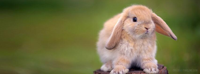 http://www.covermytimeline.com/wp-content/uploads/2012/03/easter-bunny-facebook-cover.jpg