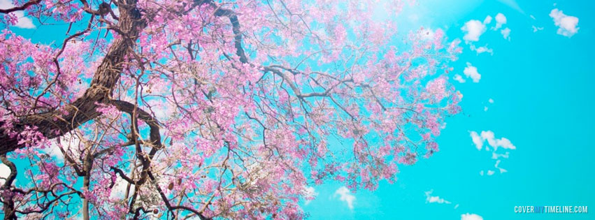 Spring cherry blossom tree free facebook covers facebook flowers spring mightylinksfo