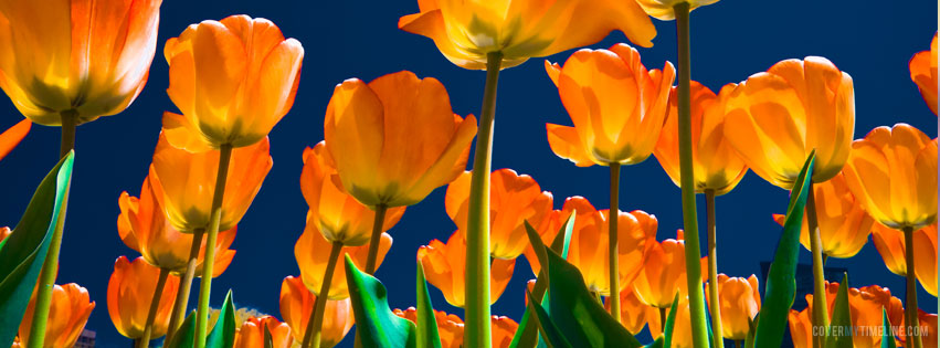 Springtime Archives Free Facebook Covers Facebook