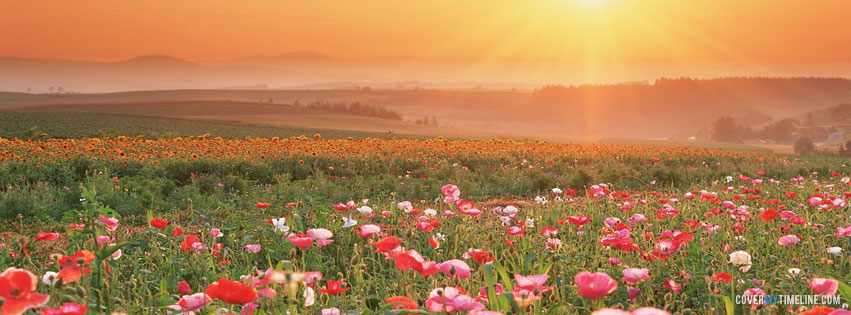 Spring Sunrise Flowers Free Facebook Covers Facebook Timeline