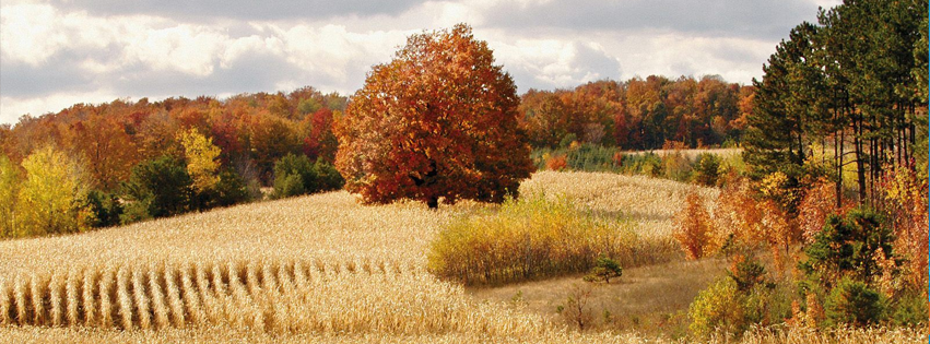 fall-autumn-field-facebook-timeline-cover
