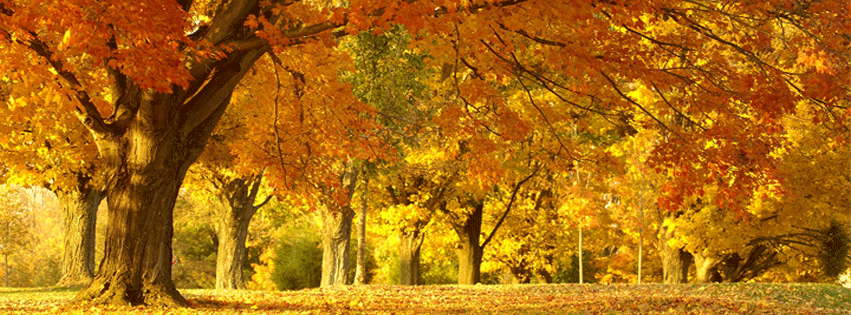fall-leaves-autumn-facebook-timeline-cover