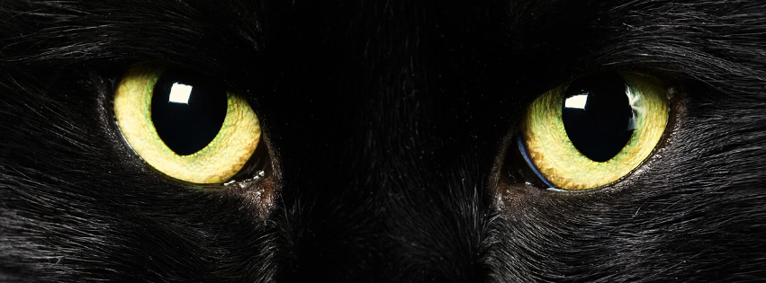 halloween-black-cat-eyes-facebook-timeline-cover